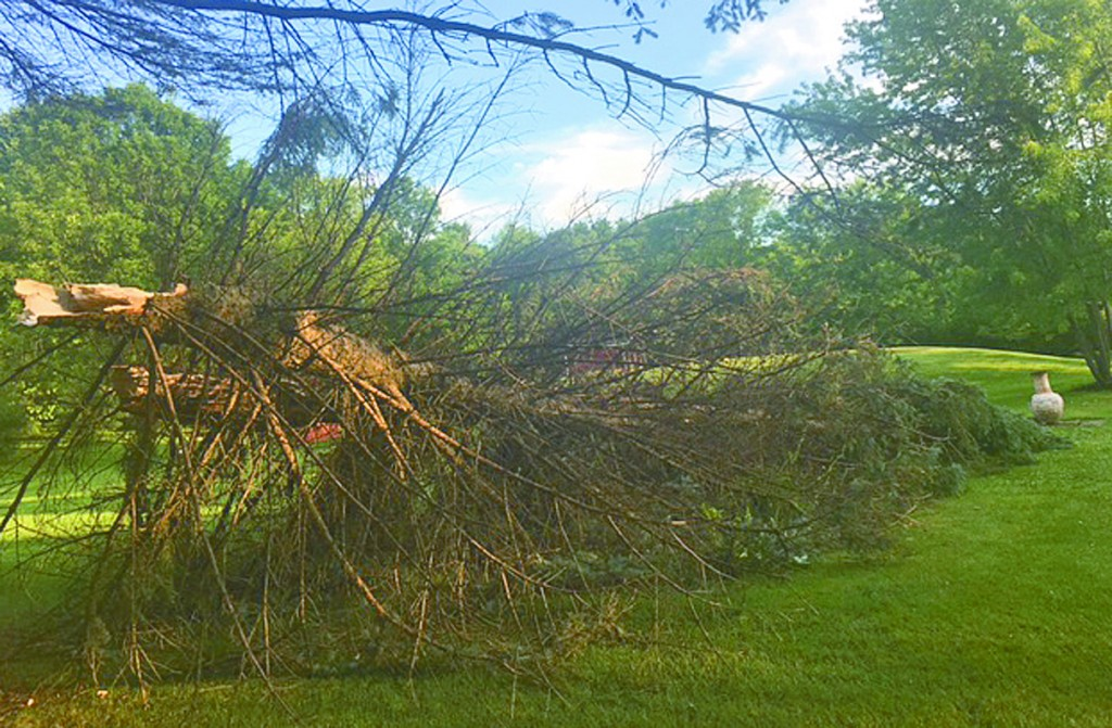 Kim Lucarelli said she heard what sounded like a freight train before this tree fell around 2:20 a.m.